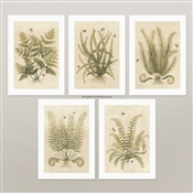 Vintage Fern Prints for framing