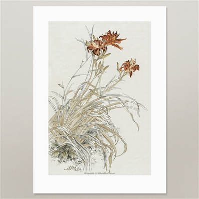 Day Lily Flower prints for framing